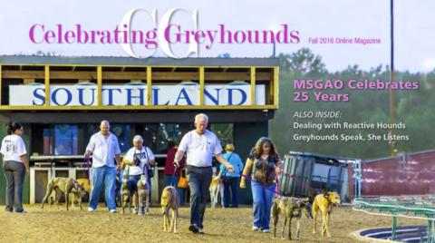 Fall 2016 Celebrating Greyhounds Magazine cover